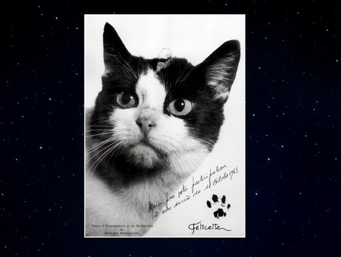 Hommage à Félicette . Le 1er chat envoyé dans l'espace … Depuis l'Algérie !